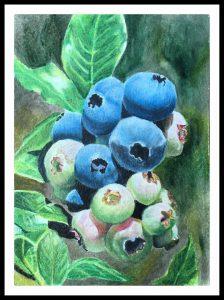 Artist Helene Rush Blueberrys