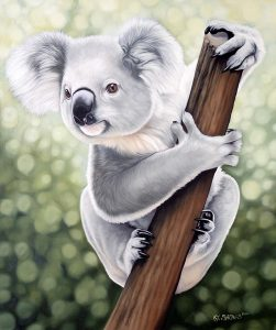 Koala prints available funds raised will go to WIRES Wildlife Rescue in Australia.
